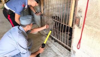 Scoperto canile abusivo: carabinieri liberano 22 cuccioli